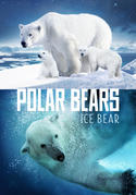 Polar Bears - Ice Bear